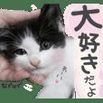 ボリス&トラジ☆すたんぷ