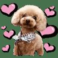 可爱的小狗9号大字每天2