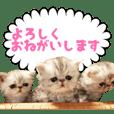 しゃっくんズ3 敬語編