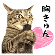 cat! cat!! cat!!! part5