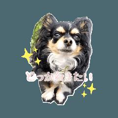 Syo_20190902021848