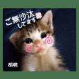 幸せ保護にゃんず Vol.4 ~秋向き編~
