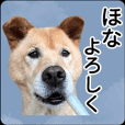 ARKなしっぽ_関西弁犬