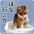 ARK Cats Tails_jp