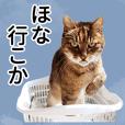 ARKなしっぽ_関西弁猫