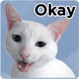 ARK Cats Tails_en