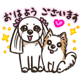 White Shih Tzu and Chihuahua Sticker