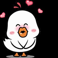 White Little Chicken
