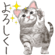 Sticker for people who like a cat 2