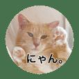 保護猫ふれあいサロンOhana  猫がいっぱい