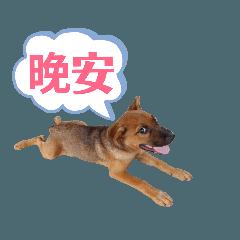 Dog G life