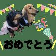 愛犬の日々 毎日スタンプ