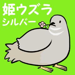 敬語のヒメウズラ・シルバー・かわいい小鳥