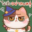 Hoshii mystic cat