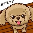 保護犬のトイプー