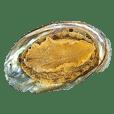 Small Abalone!