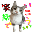【ちゅうたろう一家】No.2 猫スタンプ