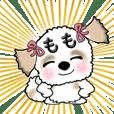 Shih tzu dog momo-chan