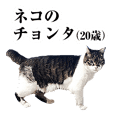"""20 years old cat """"Chonta"""""""