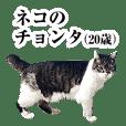 ネコのチョンタ(20歳)
