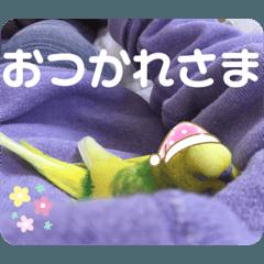 honobono_20190916214551