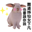 BunnyBambi chat with you