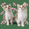 towa_uta.nikki
