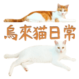 Daily routine of Cats in Wulai