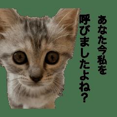 オリーブの日常会話 〜幼い編〜