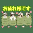 ShihTzuwagashifamily