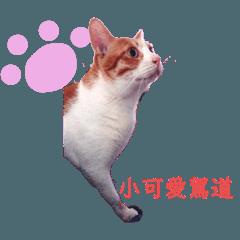 小腿毛胖貓咪