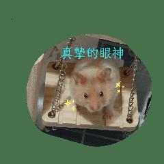pig_20190920232543