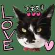 ラブコ保護猫モデルスタンプ
