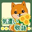 柴犬「ムサシ」23 気遣い 敬語