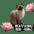 暹羅貓蓋子2