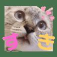 azumama_20190923185812