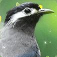 Wild bird friend - good morning