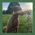 日本ペット公式【犬スタンプ】第一弾