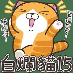 白爛貓15☆超愛玩☆