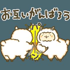 Laid-back Alpaca