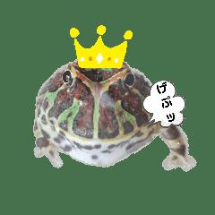 カエルのタロちゃん