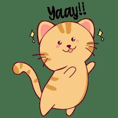 Kitty Cat Life 1