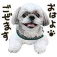 Shih tzu dog tempo photo sticker