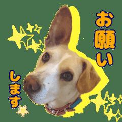 保護犬×雑種×ミル×敬語