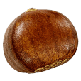 Chestnut!!