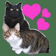 My cats kuu and huuta