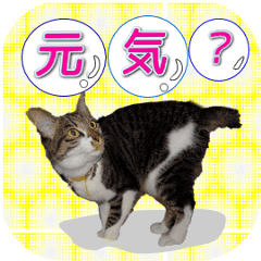 Moving cat for family contact sticker