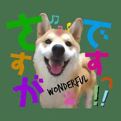 柴犬ちょろのスタンプ②~Choro's Life~
