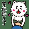 08didi_a cutest pomeranian _ lifewords