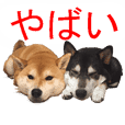 TALKING SHIBA-INU Everyday conversation3